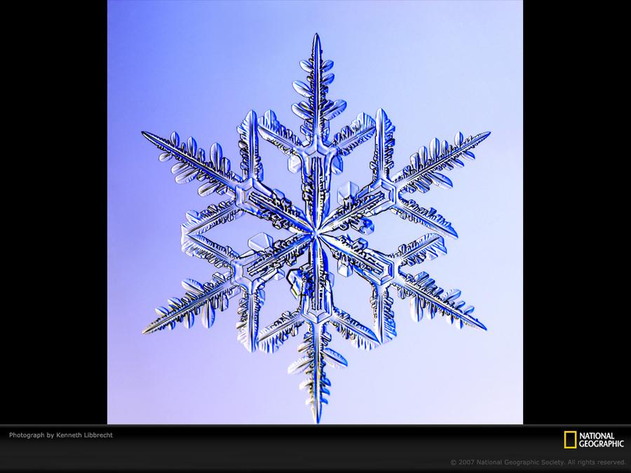 当气温在零下1°到零下3°的时候会形成树枝状的雪花 作者 kenneth