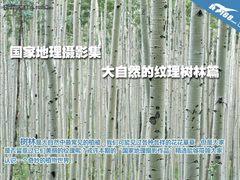 《国家地理摄影》 大自然的纹理树林篇