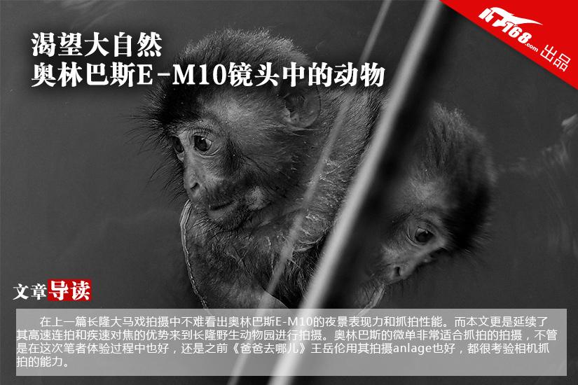 渴望大自然 奥林巴斯E-M10镜头中的动物
