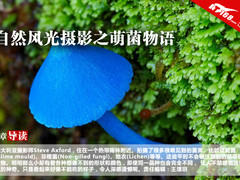 摄影样片:自然风光之萌菌物语