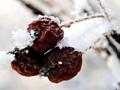 Win7/Win8官方主题推荐:《冬季花园》