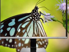 卢瓦尔LV323WUPX显示器创全新色彩视界