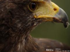 索尼黑卡RX10M3 开启打鸟新视界