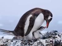 自然之美 鸟类摄影大赛获作品揭晓