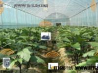 农业物联网:稳步发展护航食品安全