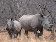 带上索尼A9和G大师镜头  穿越非洲丛林