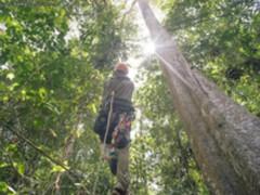 Google AI应用:从动植物保护到寻找未知行星